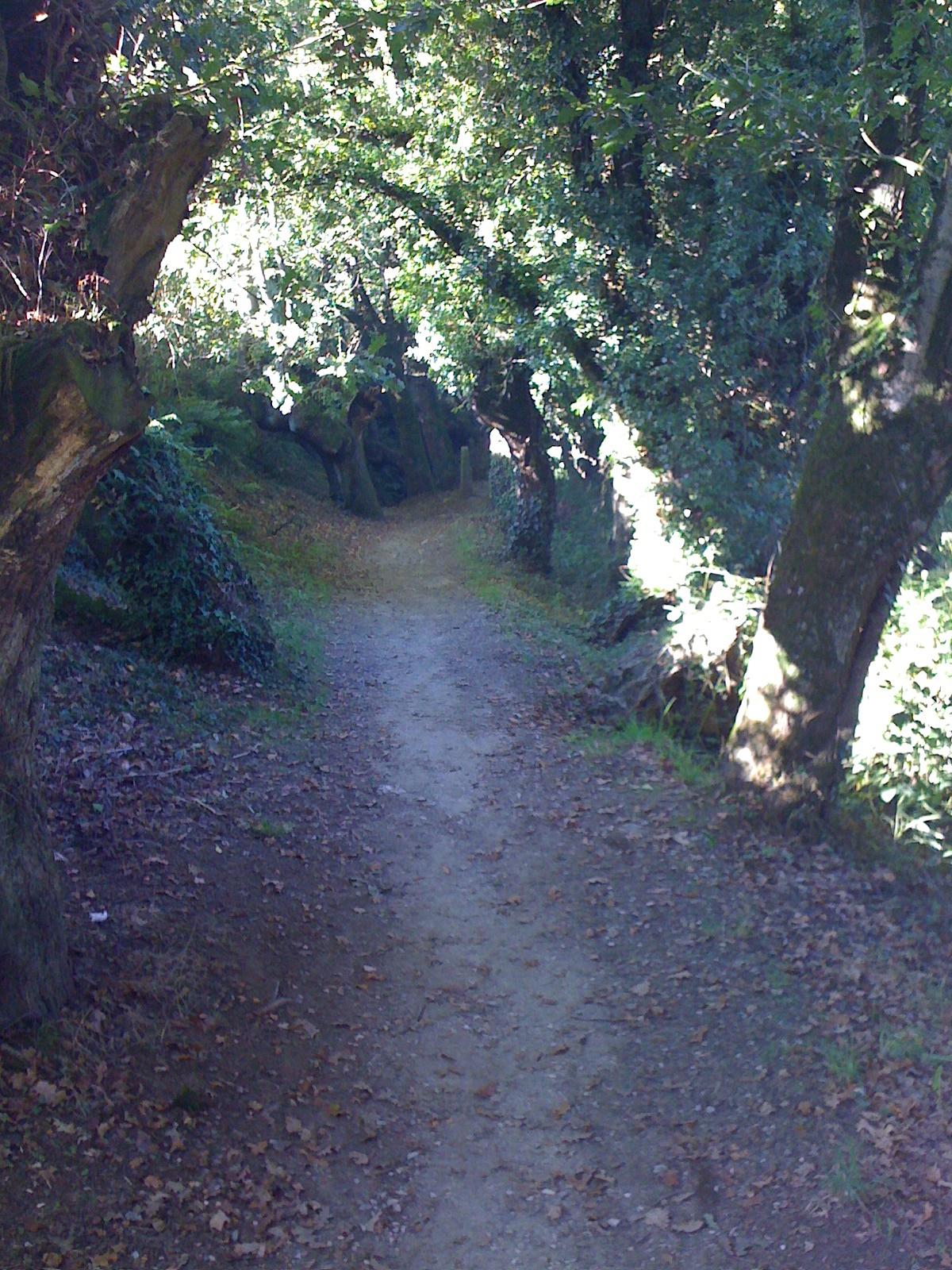 ein wunderschöner Waldweg mit Kastanien gesäumt