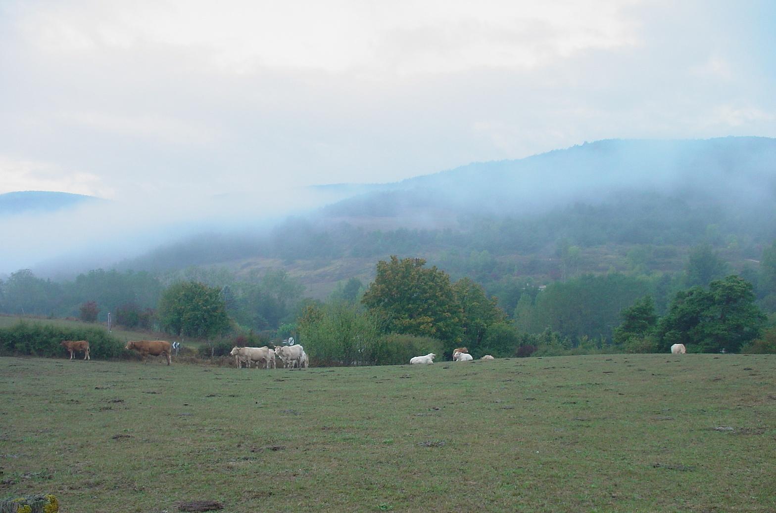 Pyrenäen, Weidelandschaft