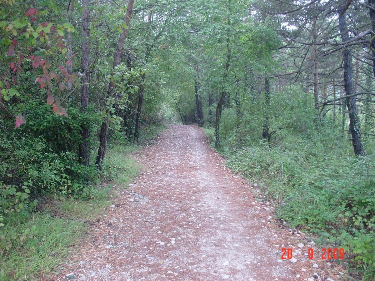Waldpfad, auf dem Weg nach Trinedad de Arre