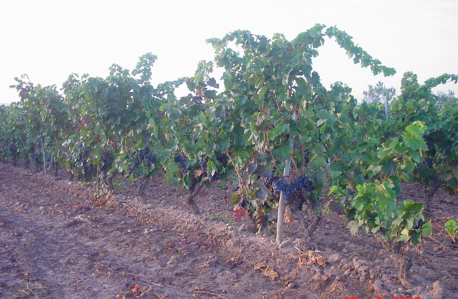 Weinregion Rioja