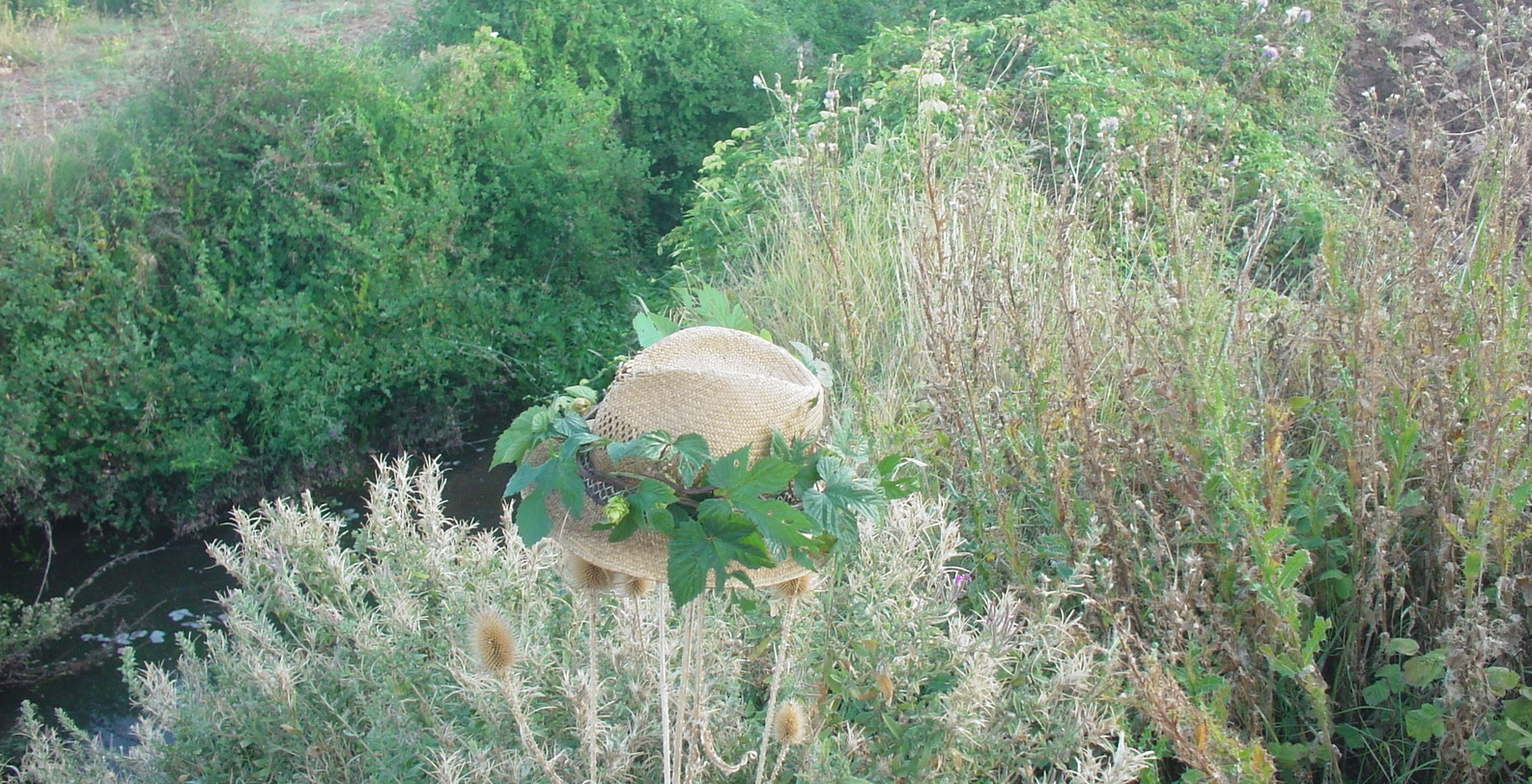 sitzt da einer im Gebüsch